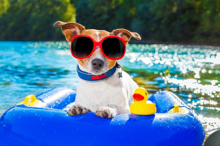 summer-vibes-these-animals-know-how-to-have-fun-during-this-season-character